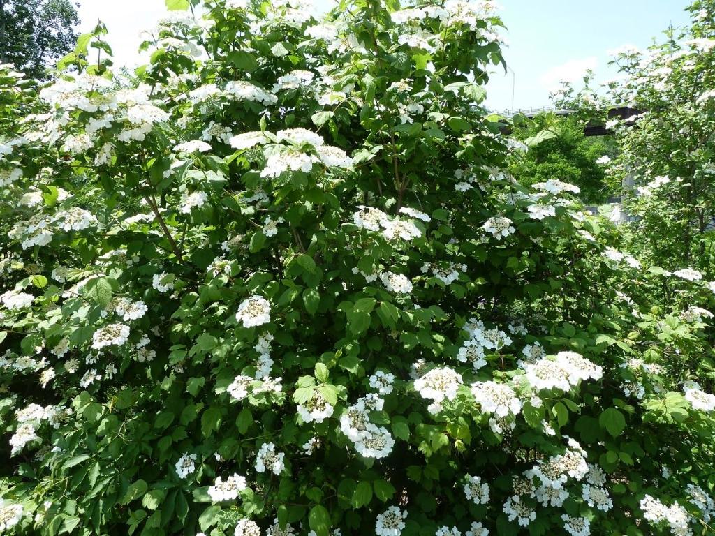 cranberry  u2013 gammon u0026 39 s garden center  u0026 landscape nursery