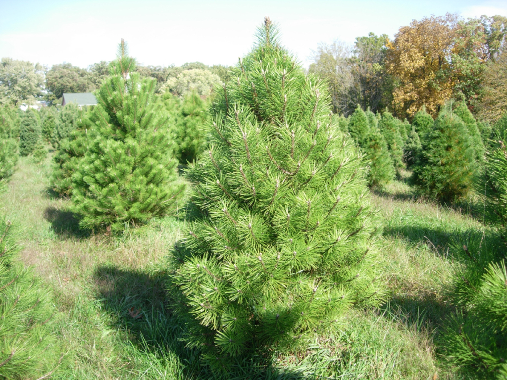 Pine Gammon S Garden Center Amp Landscape Nursery