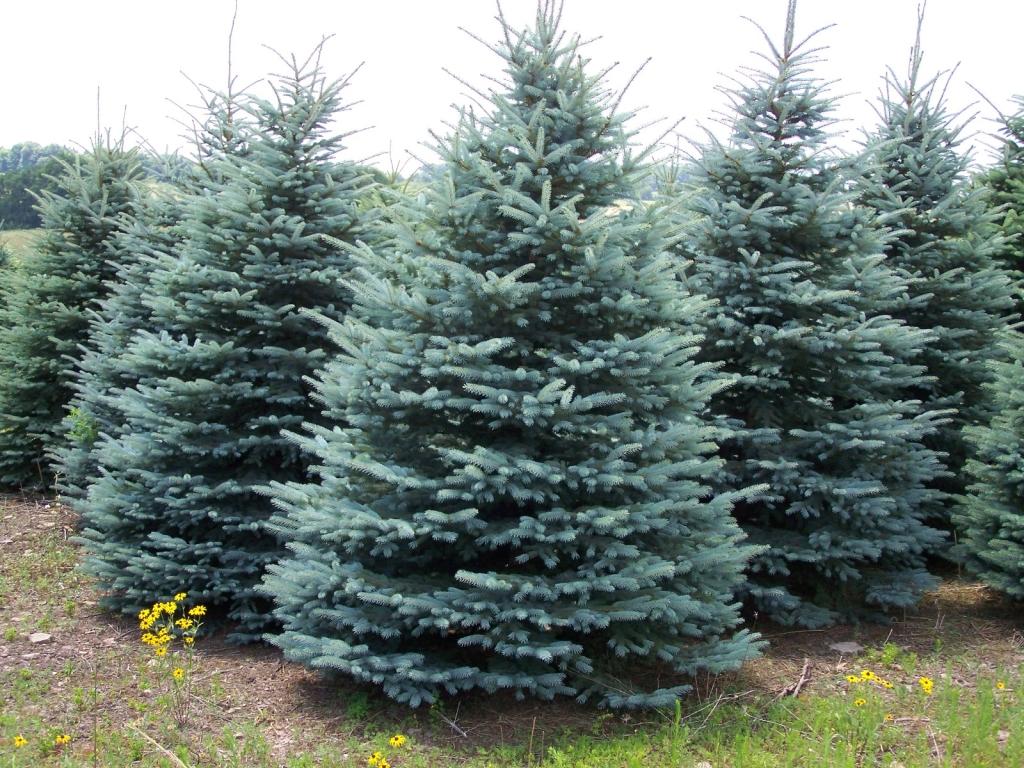 10 Ft White Christmas Tree