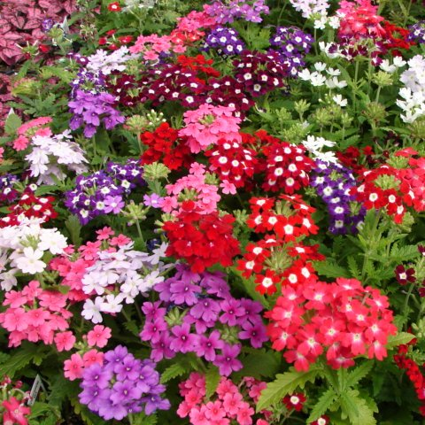 Annuals Gammon S Garden Center Amp Landscape Nursery