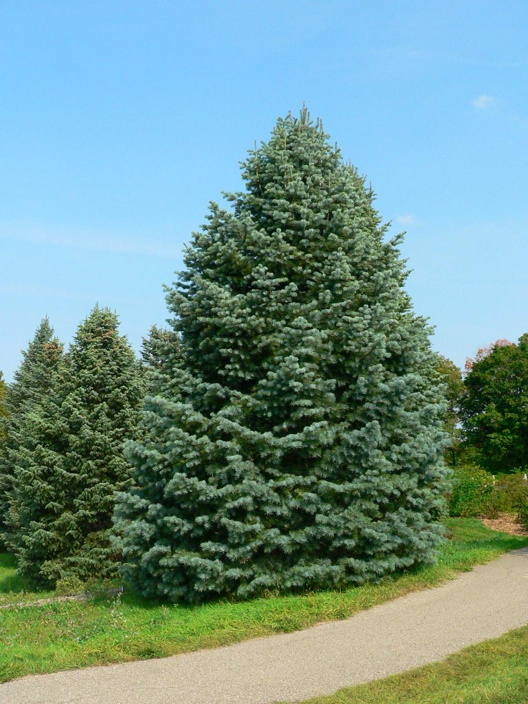 Gray Christmas Tree