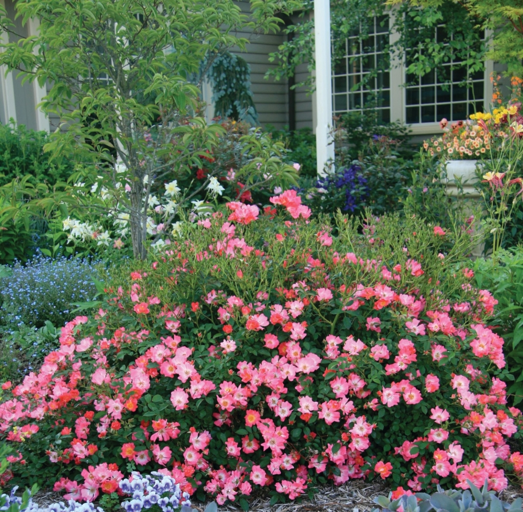 Roses In Garden: Gammon's Garden Center & Landscape Nursery
