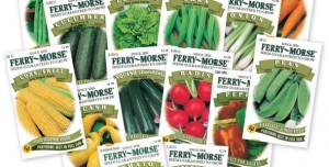 Ferry-Morse-Large-Vegetable-seeds-591x300